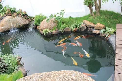 Chống thấm hồ cá cảnh
