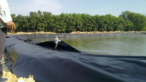 Màng hdpe sử dụng trong chăn nuôi thủy sản