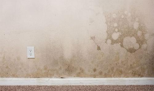 tường nhà mới bị thấm nước, ẩm mốc