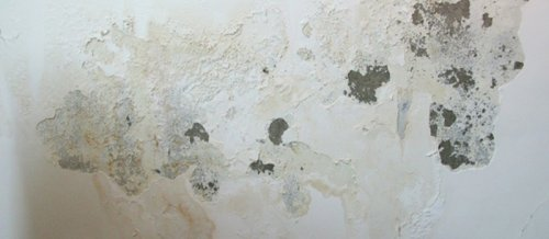 tường nhà bị muối