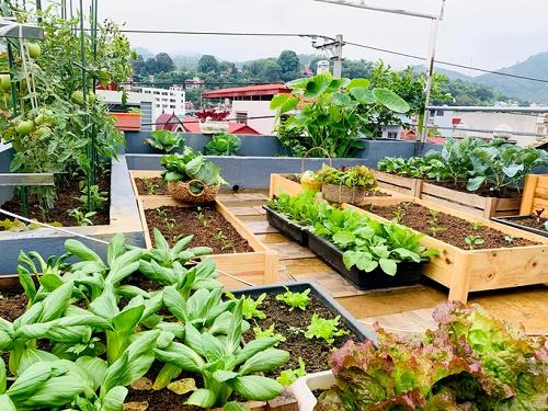 Tận dụng sân thượng để trồng rau